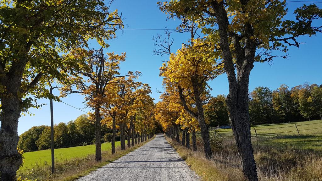 Landsväg till Skånelaholms slott